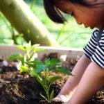 5月がチャンス!子どもと一緒に野菜を育てよう